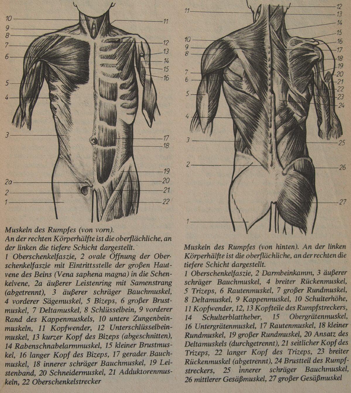 Muskeln Trainieren ohne Muckibude